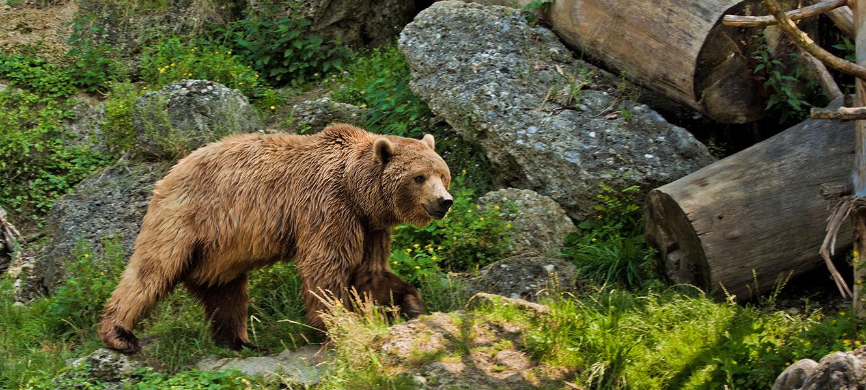 Tagesausflüge in Radstadt & im Salzburger Land - Wildparks & Zoos